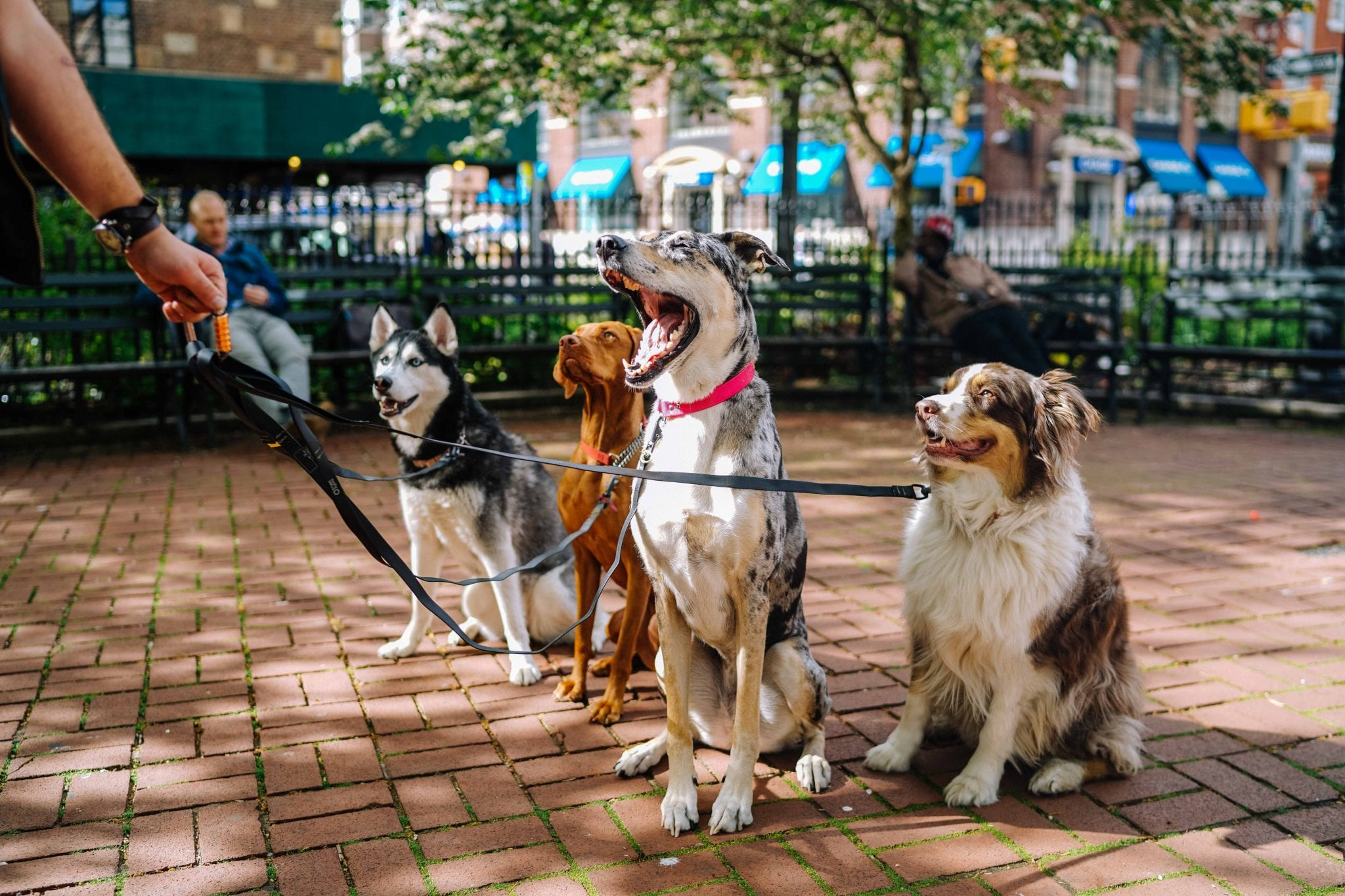 Tax Advice Dog Walker Dog Sitter
